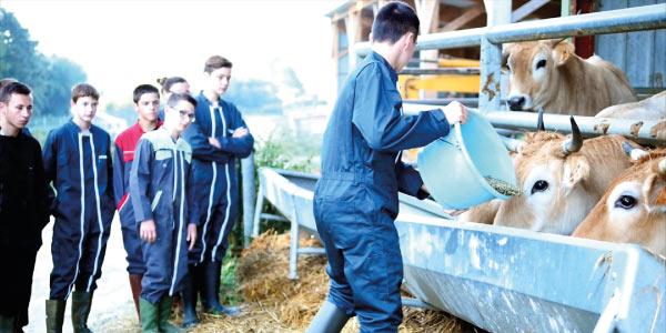 vache-ferme-lycee-amiens-alimentation-bio